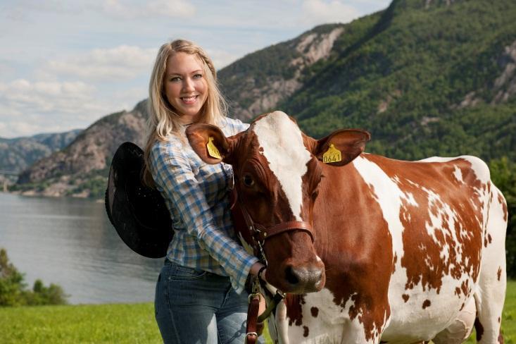 W Polsce rośnie zainteresowanie hodowlą norweskiej rasy czerwonej.