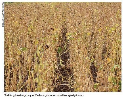 Podstawowe zasady technologii uprawy soi