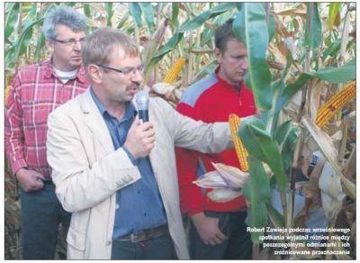 Kukurydza może plonować jeszcze lepiej